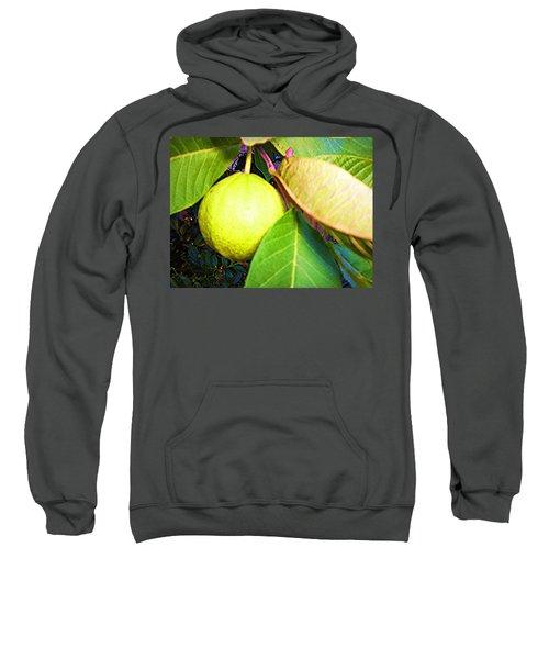 The Rose Apple Sweatshirt