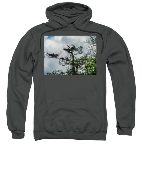 The Vultures Are Waiting Sweatshirt