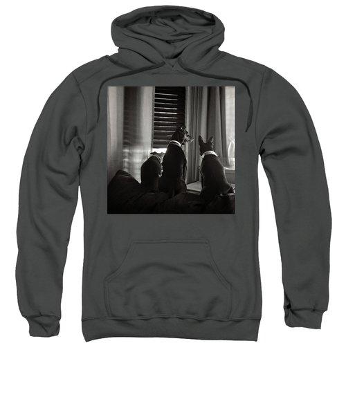 Three Min Pin Dogs Sweatshirt