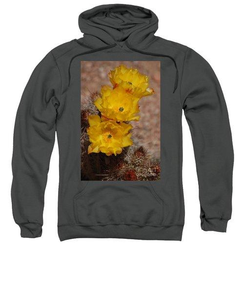 Three Yellow Cactus Flowers Sweatshirt