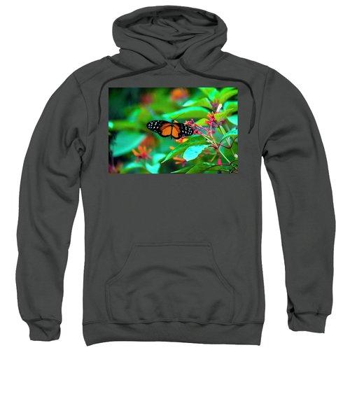 Tiger Longwing Butterfly Sweatshirt