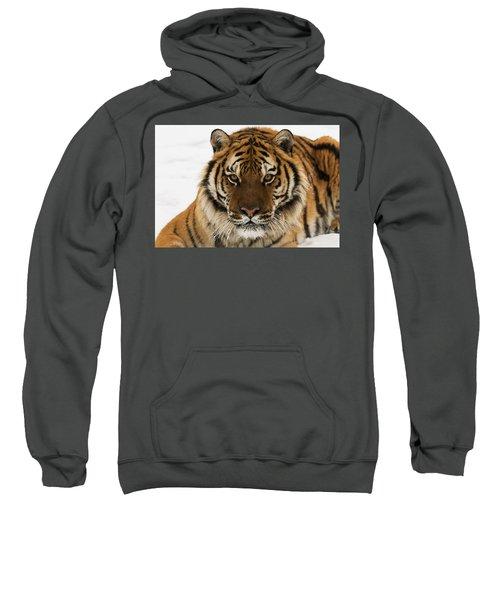 Tiger Stare Sweatshirt