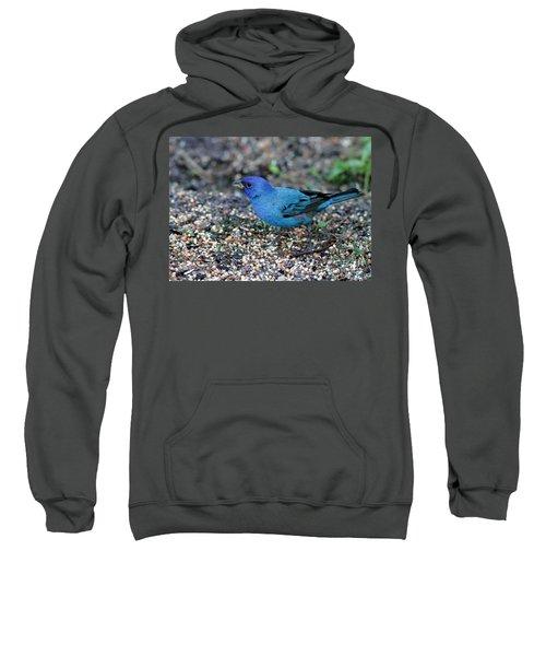 Tiny Indigo Bunting Sweatshirt