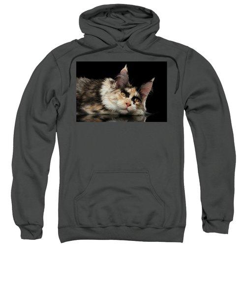 Tired Maine Coon Cat Lie On Black Background Sweatshirt