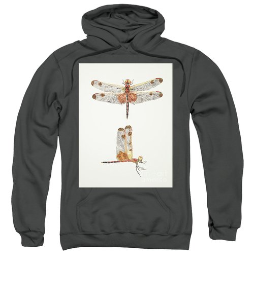 Top And Side Views Of A Male Calico Pennant Dragonfly Sweatshirt