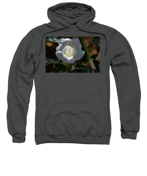 Touch Of Color Sweatshirt