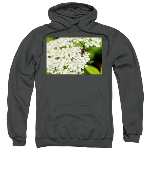 Transverse Flower Fly Sweatshirt