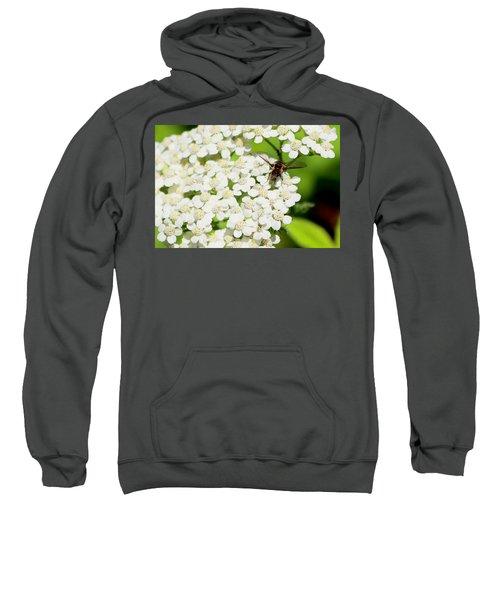 Transverse Flower Fly Sweatshirt