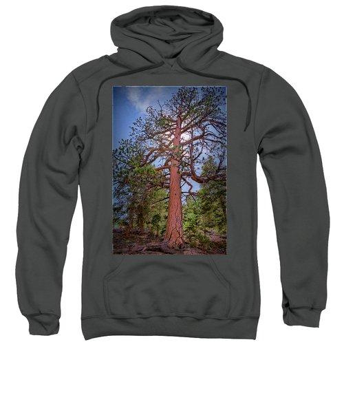 Tree Cali Sweatshirt