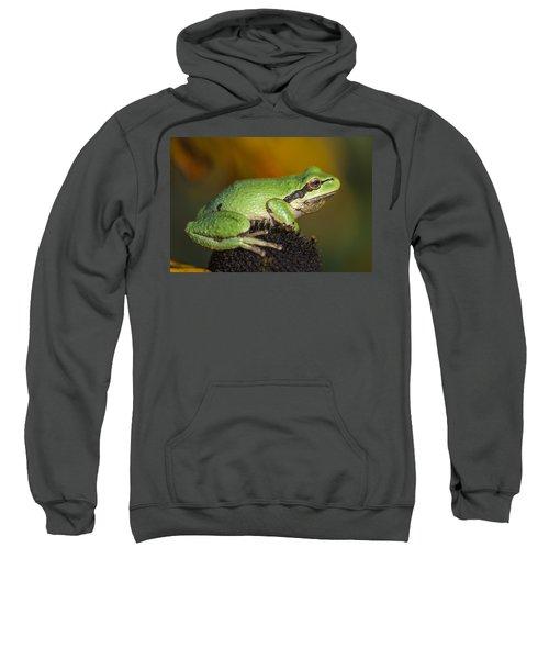 Treefrog On Rudbeckia Sweatshirt