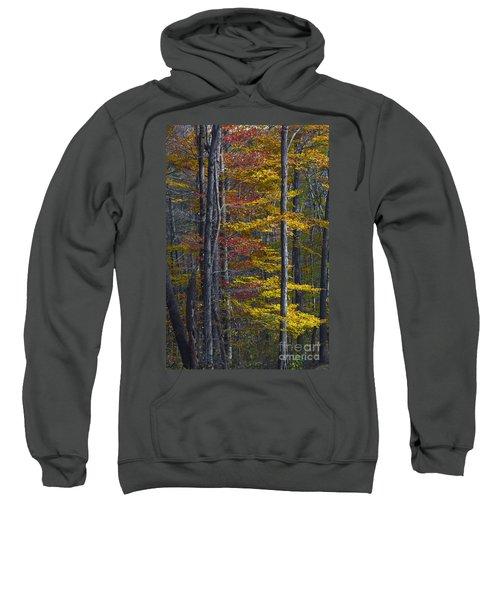 Trees With Autumn Colors 8260c Sweatshirt