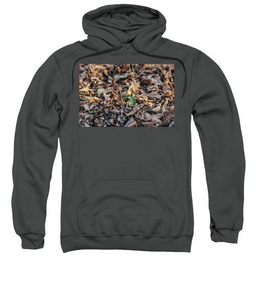 Trillium Blooming In Leaves On Forrest Floor Sweatshirt