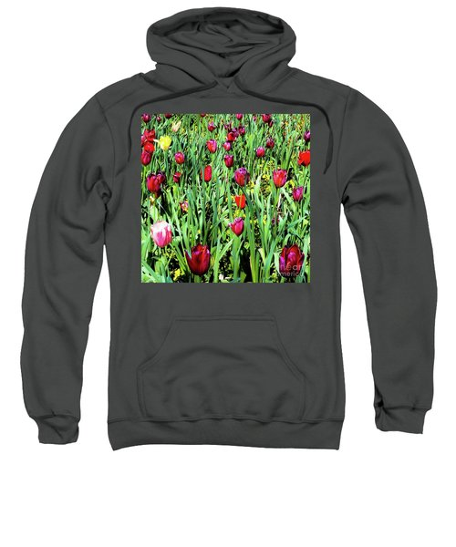 Tulips Blooming Sweatshirt