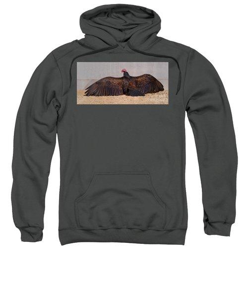Turkey Vulture Spreading Wings Sweatshirt