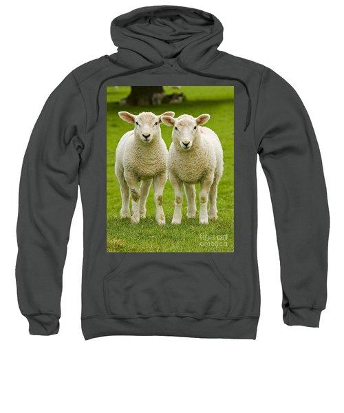 Twin Lambs Sweatshirt