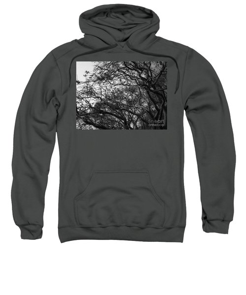 Twirling Branches Sweatshirt
