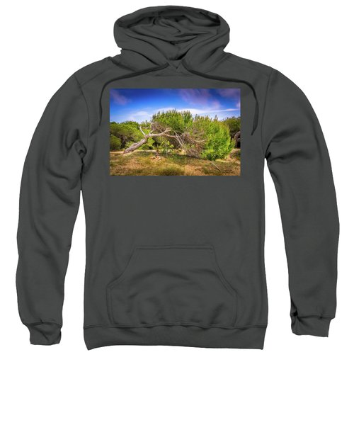 Twisted Tree Sweatshirt