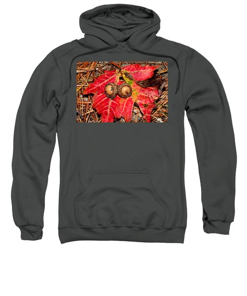 Two Acorns On Tatterd Maple Leaf Sweatshirt