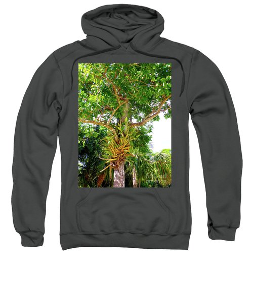 Sweatshirt featuring the photograph Under A Tropical Tree M by Francesca Mackenney