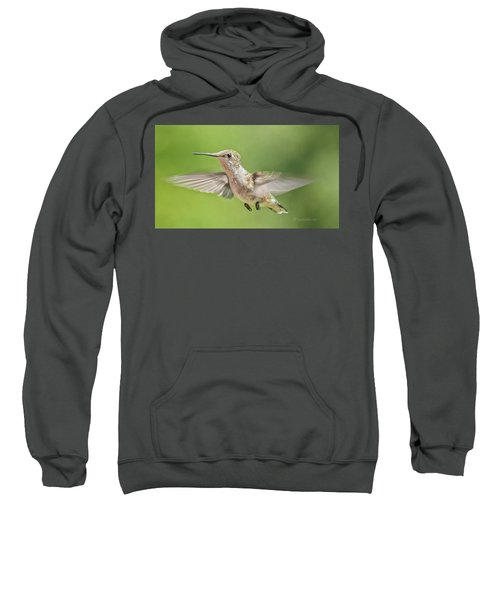 Untitled Hum_bird_three Sweatshirt
