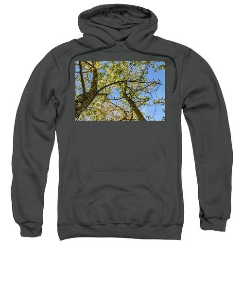Up A Tree Sweatshirt