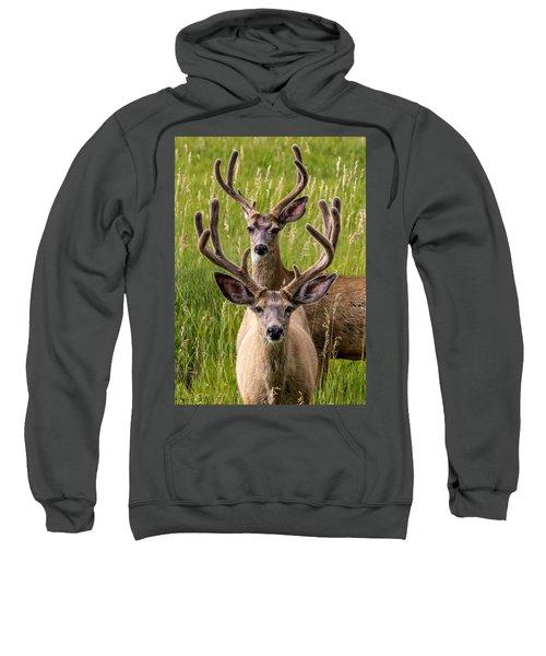 Velvet Bucks Sweatshirt