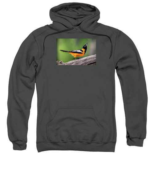 Venezuelan Troupial Sweatshirt