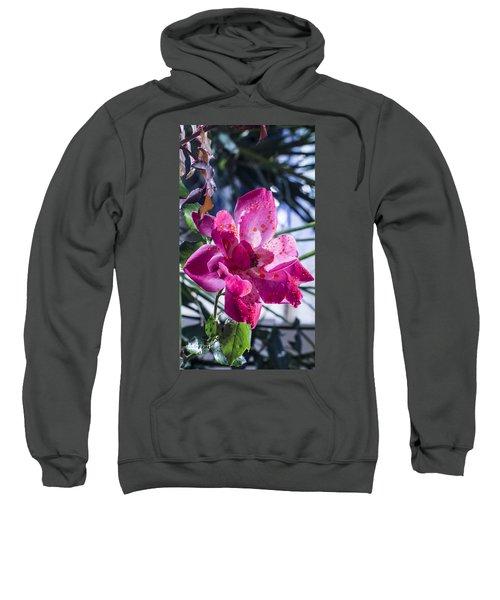 Vibrant Pink Rose Sweatshirt