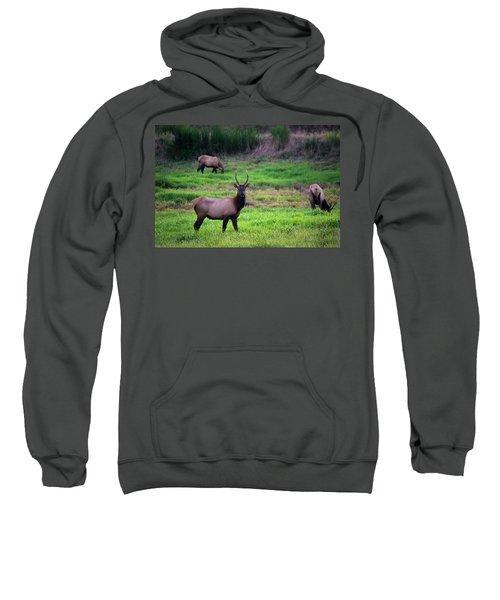 Vigilant Sweatshirt