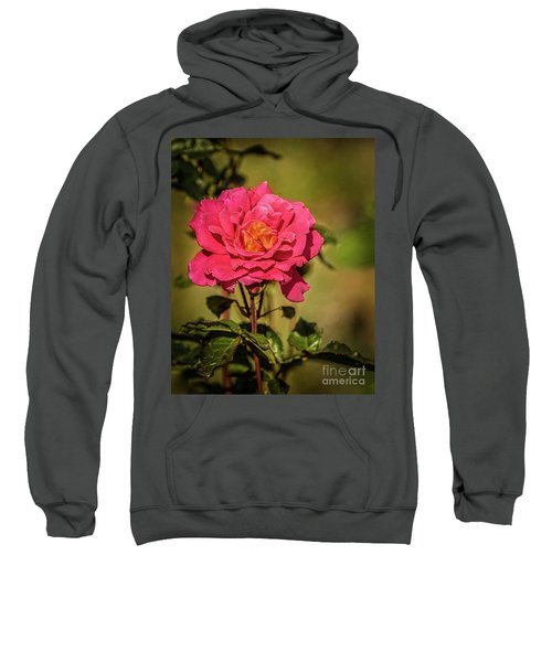 Vignetted  Rose Sweatshirt