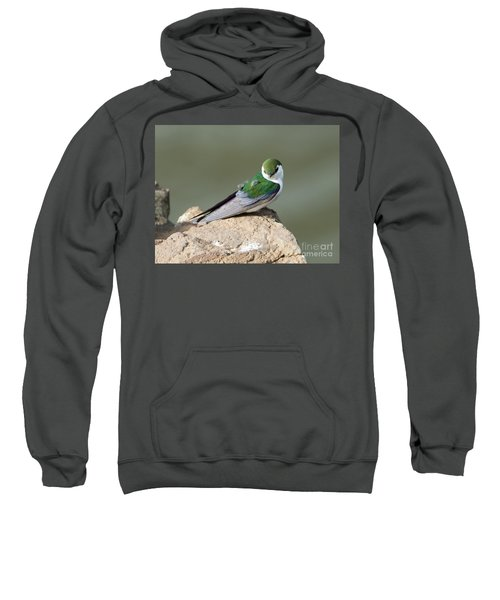 Violet-green Swallow Sweatshirt by Mike Dawson