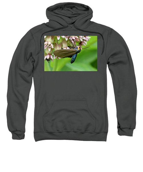 Virginia Ctenucha Moth Sweatshirt