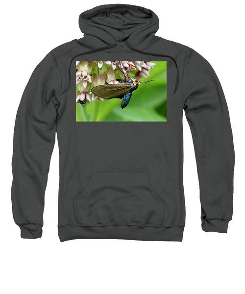 Virginia Ctenucha Moth Sweatshirt