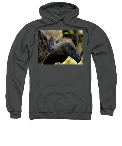 Vulture Sweatshirt by Martin Newman