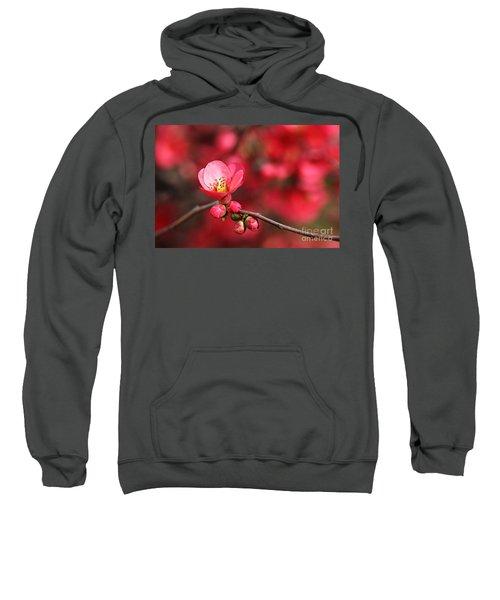 Warmth Of Flowering Quince Sweatshirt
