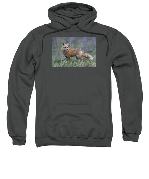 Sweatshirt featuring the photograph Watchful by Gary Lengyel