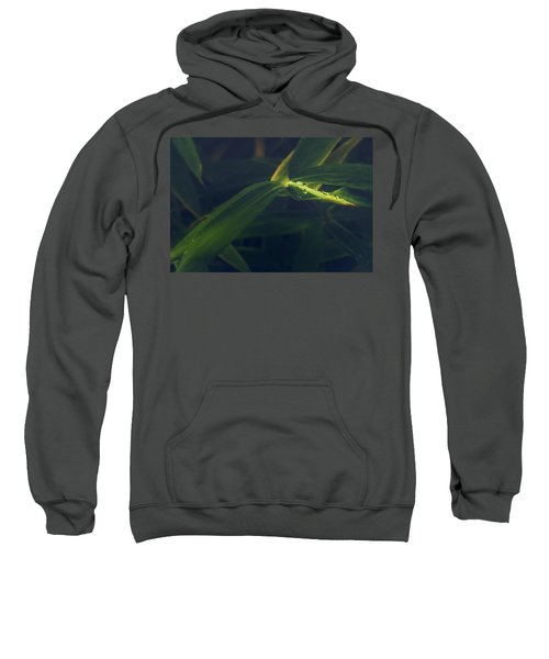 Water Catcher Sweatshirt
