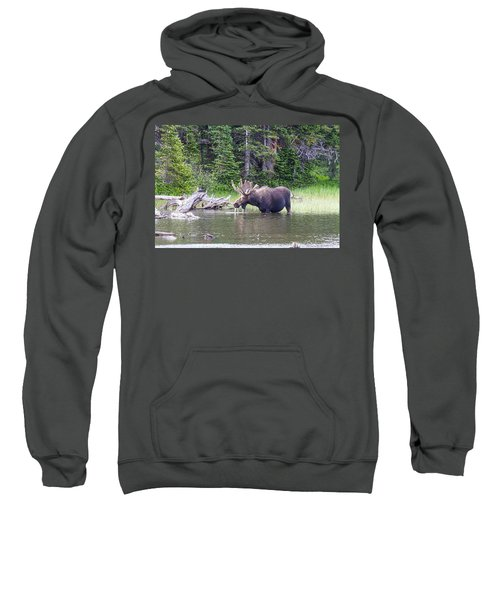Water Feeding Moose Sweatshirt