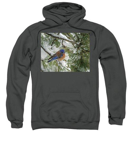 Western Bluebird In A Snowy Pine Sweatshirt