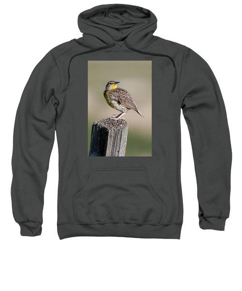 Western Meadowlark Sweatshirt