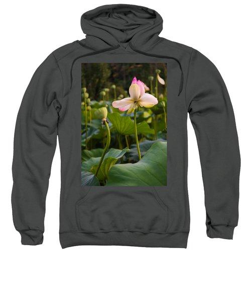 Wetland Flowers Sweatshirt