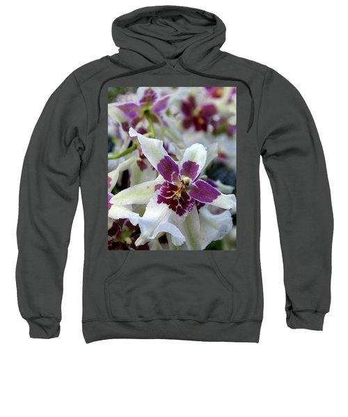 Purple And White Orchid Sweatshirt