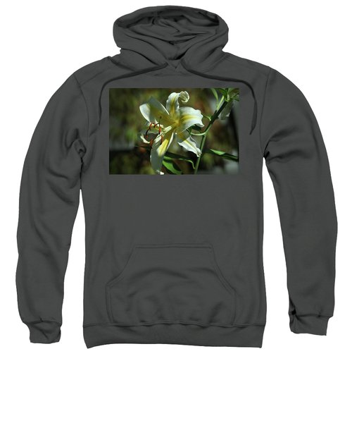White And Yellow Asiatic Lilly No 1 Sweatshirt