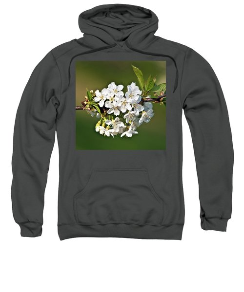 White Apple Blossoms Sweatshirt