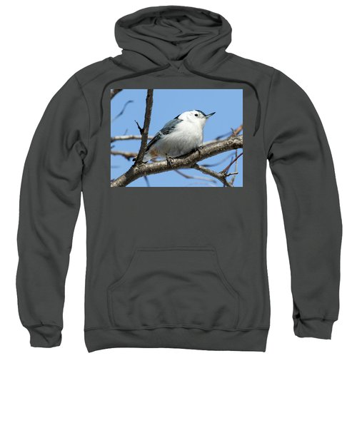 White-breasted Nuthatch Perched Sweatshirt