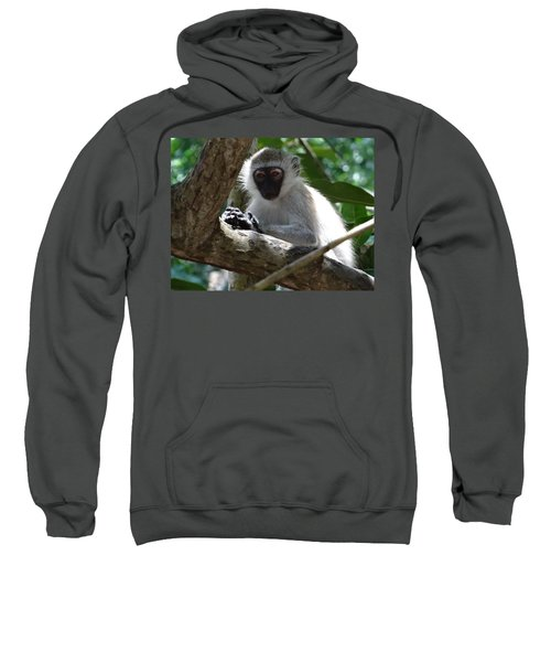 White Monkey In A Tree 4 Sweatshirt