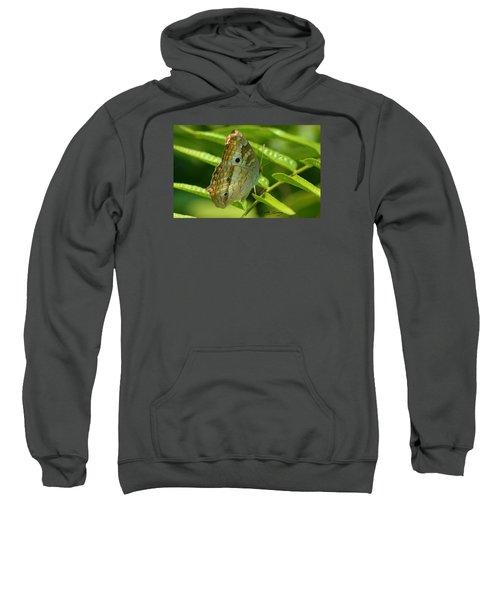 White Peacock Butterfly 2 Sweatshirt