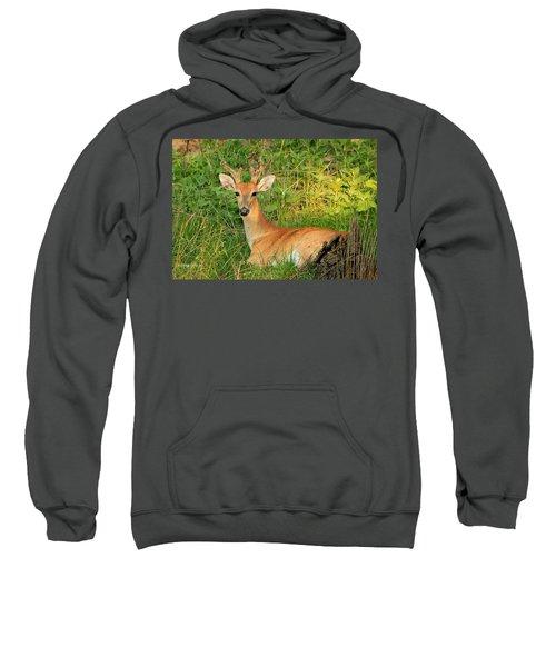 White-tail Buck Resting Sweatshirt