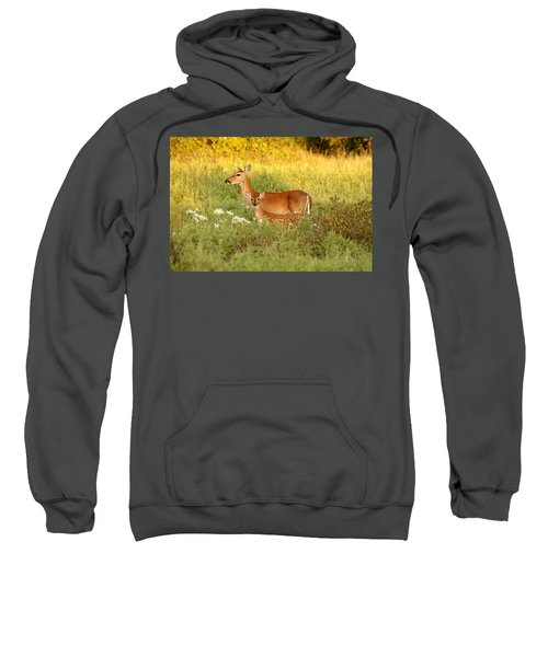 White-tail Doe And Fawn In Meadow Sweatshirt