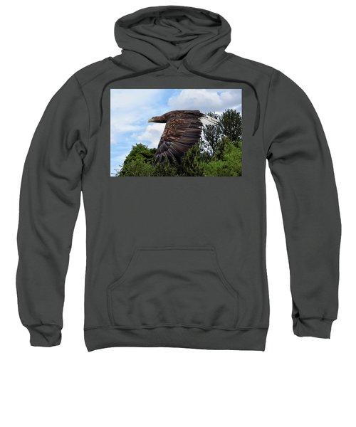 White Tailed Eagle Sweatshirt